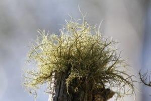 sun damaged hair